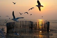Os pássaros que voam no céu do por do sol imagem de stock