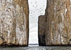 Os pássaros que voam sobre o retrocesso balanç, Galápagos fotos de stock royalty free