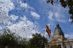 Os pássaros que voam sobre a plaza Murillo esquadram em La Paz, Bolívia imagens de stock