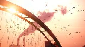 Os pássaros românticos bonitos do fundo do por do sol pululam o fumo vermelho do céu do movimento lento filme