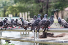 Os pássaros são bons povos Na ilha há diversos bonitos Imagem de Stock Royalty Free