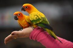 Os pássaros são ilhas bonitas para esperar povos para comer Imagem de Stock