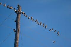Os pássaros sentam-se em fios Imagens de Stock