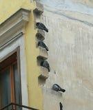 Os pássaros tomam o abrigo da chuva fotografia de stock