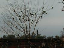 Os pássaros tristes ainda cantam Fotos de Stock Royalty Free