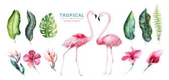 Os pássaros tropicais tirados mão da aquarela ajustaram-se do flamingo Ilustrações cor-de-rosa exóticas do pássaro, árvore da sel ilustração royalty free