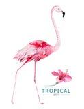 Os pássaros tropicais tirados mão da aquarela ajustaram-se do flamingo Ilustrações exóticas do pássaro, árvore da selva, arte na  Fotos de Stock Royalty Free