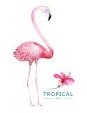 Os pássaros tropicais tirados mão da aquarela ajustaram-se do flamingo Ilustrações exóticas do pássaro, árvore da selva, arte na  Imagem de Stock