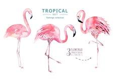 Os pássaros tropicais tirados mão da aquarela ajustaram-se do flamingo Ilustrações exóticas do pássaro, árvore da selva, arte na