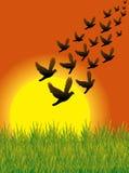 Os pássaros voam 01 ilustração do vetor