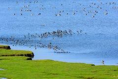 Os pássaros voam Imagens de Stock