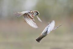 os pássaros voam no parque para espalhar suas asas fotografia de stock