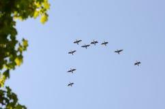 Os pássaros voam pela armação Fotografia de Stock