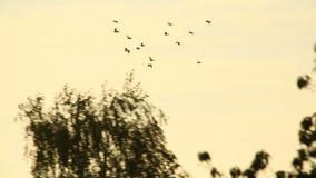 Os pássaros voam perto video estoque