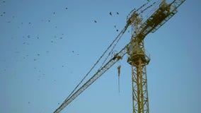 Os pássaros voam sobre um guindaste de construção vídeos de arquivo