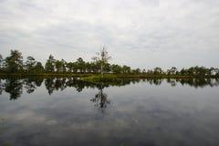 Os pântanos Imagem de Stock