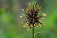 Os pés da aranha gostam da flor Imagem de Stock Royalty Free