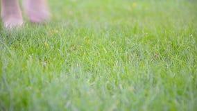Os pés da jovem mulher na grama filme