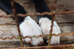 Os pés de um cão preto Imagem de Stock