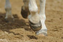 Os pés do cavalo fecham-se acima Imagens de Stock Royalty Free
