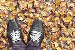 Os pés equipam o passeio nas folhas do amarelo da queda Estilo de vida, forma e estilo na moda Anunciando sapatas imagem de stock royalty free