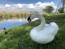 Os p?ssaros no lago Constance em Kreuzlingen ou em dado Voegel oder Vogel s?o Bodensee imagens de stock royalty free