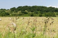 Os pacotes da palha em um campo durante o verão colhem Fotografia de Stock Royalty Free