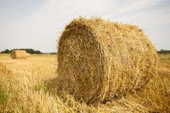 Os pacotes da palha rolaram acima, o restolho da colheita. Imagens de Stock Royalty Free