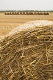 Os pacotes da palha rolaram acima, o restolho da colheita. Foto de Stock