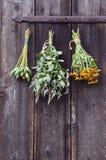 Os pacotes de ervas médicas penduraram na porta antiga do rancho Fotos de Stock Royalty Free