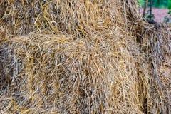 Os pacotes de pilhas do feno mantêm no celeiro da exploração agrícola da agricultura o símbolo de colher a estação Foto de Stock