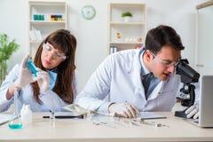 Os paleontologists que olham os ossos de animais extintos fotos de stock