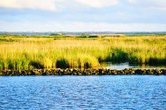 Os pantanais de Louisiana fotos de stock royalty free