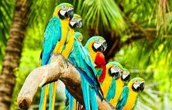 Os papagaios Imagens de Stock