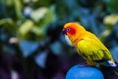 Os papagaios são os pássaros bonitos que alimentam a maioria dos pássaros são bonitos Fotos de Stock Royalty Free
