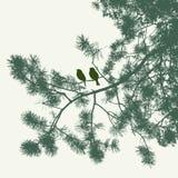 Os pardais nos ramos spruce Fotografia de Stock