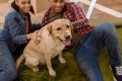 os pares afro-americanos felizes com Labrador perseguem mover-se para imagens de stock royalty free