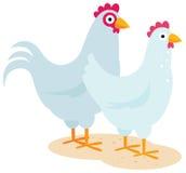 Os pares de pássaros domésticos um galo e uma galinha em uns desenhos animados denominam Fotografia de Stock