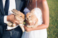 Os pares do casamento estão guardando dois coelhos pequenos, horas de verão Fotos de Stock