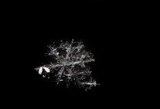 Os pares do floco de neve fecham-se isolado acima no preto Fotografia de Stock Royalty Free