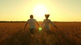 Os pares, guardando as mãos, corrida ao longo do campo de trigo dourado sobre o por do sol bonito em um movimento lento video estoque