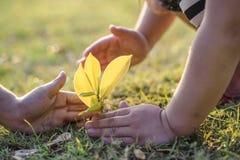 Os pares novos que guardam as mãos ajudam a árvore da planta fotos de stock royalty free