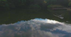 Os patos da câmera aérea flutuam no lago em qual reflete a floresta densa bonita e o céu ensolarado azul ilimitado filme