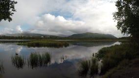 Os patos do pato selvagem que nadam na lagoa reflexiva calma surgem video estoque