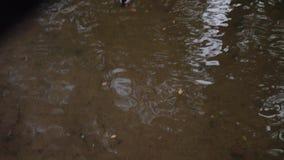 Os patos nadam em uma lagoa pequena na cidade P?ssaros engra?ados wildlife vídeos de arquivo