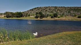 Os patos no lago do gambá imagem de stock