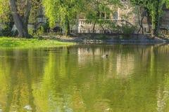 Os patos que nadam na lagoa na frente de Vajdahunyad fortificam no botão Imagens de Stock Royalty Free