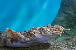 Os peixes atapetam o tubarão fotografia de stock