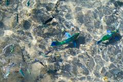 Os peixes coloridos aparecem na superfície imagens de stock