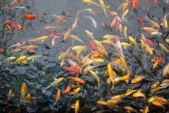 Os peixes da paisagem Imagens de Stock Royalty Free